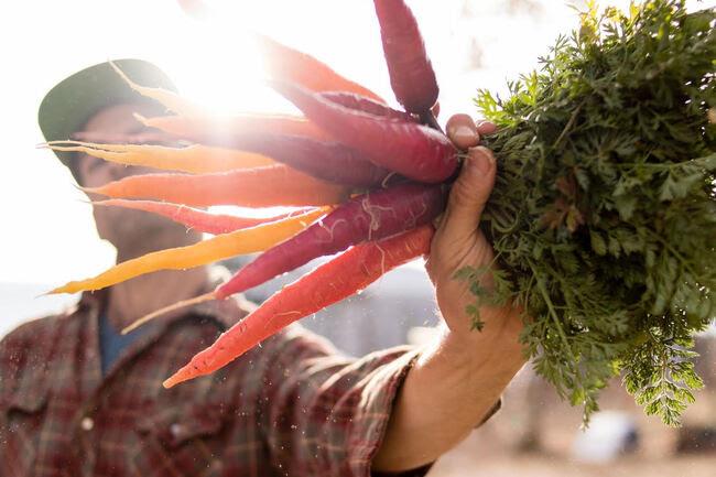 BONUS TRACKS: Food Matters and Gifts That Do Good - No Depression